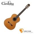 Cordoba 美國品牌 C10 全單板 紅松木 古典吉他 附輕體硬盒 原廠公司貨 一年保固【C-10】