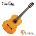 Cordoba 美國品牌 C12CD 全單板 紅松木 古典吉他 附輕體硬盒 原廠公司貨 一年保固【C-12 CD】